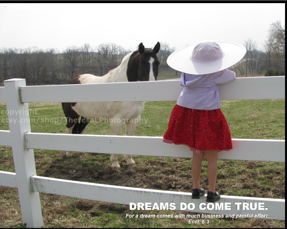 dreams-do-come-true-horse-single